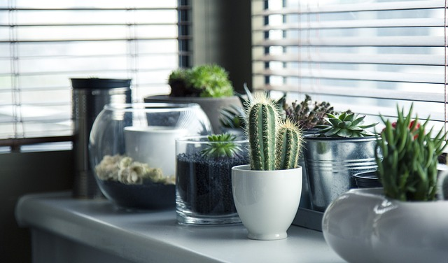 Beneficios de decorar con plantas
