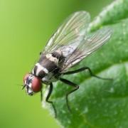 Consejos para ahuyentar a las moscas